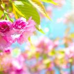 Spring-79